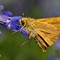 Moth Madness 2