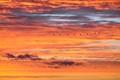 Sunset Sky with Birds