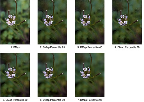 5. Zerene Images