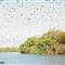 Mary River National Park fruit bats