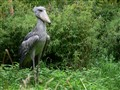 Biiig Bird