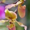 floral_33