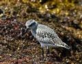 Seabird I