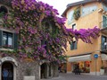 Flowering ivy, Sirmione