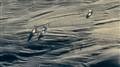 Birdosphere - CROP