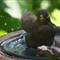 12345 JPEG. I love a bath soo much