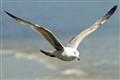 Seagull-2_edited-1