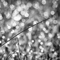 Gras ist a drop of water