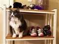 Sigmund on the Shoe Shelf