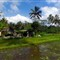 Rice field and hut