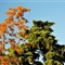 DSC_4587_Trees