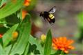 om nom pollen
