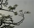 Pawaa-Ukiyo-e