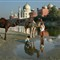Camels at Taj Mahal