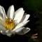 80_White_Lotus_IMG_8867