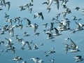 Terns take flight