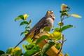 Huntington Beach City Bird-1790