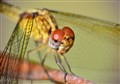 Dragon Fly Macro with Telephoto Lens