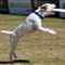 Incredible_Dog_20110402_135