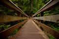 A trek through the Evergreens