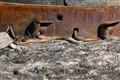 Prairie-Garter-Snake-(18)