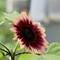 Tamron - Flower