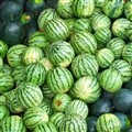 Variety of watermellons