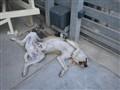 Cretan_lazy_watchdog