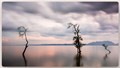 Peace on Lake