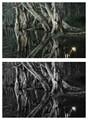 Paperbark trees 4