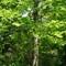 Shades of green: Springbank Park London ON