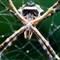 Spider_Stack