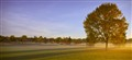 Golf_Course_Tree1