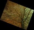 Angled Brown Tree