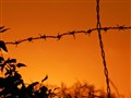 sunset barb wire fence
