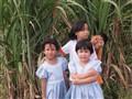 Sugarcane Kids..