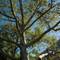 UWS Trees-1