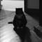 Contrast cat 2 4x6