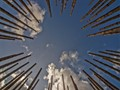 An artist was given an assignment to make a work of art that would give rise to reflection. Outside the village, he made a circle of bamboo canes.  I went to the middle of this circle, laid back on the soil, and made this picture ...