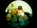 Fish Eyed