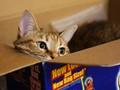 Ginger in box