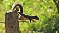 Little squirrel acrobat!