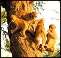 Monkey Family !!