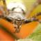 spider_5