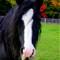 horse face (857x1280)