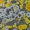 Lichens abstract