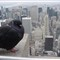A Pigeons View