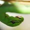 Green-worm Caterpillar: Macro shot of Green-worm Caterpillar.