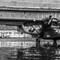 PBY 5A model