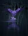 The Rare Purple Heron